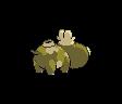 Hippopotas ♀