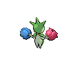 Roselia ♀