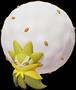 Cottomi in Pokémon Unite