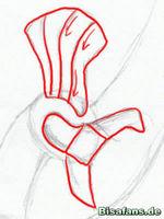 Zeichenkurs Ho-Oh - Schritt 7