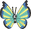 Vivillon Savannenmuster