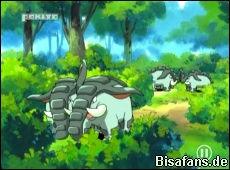 Screenshot von Donphan