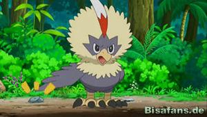 Screenshot von Geronimatz