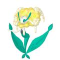 Florges Gelbblütler