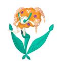 Florges Orangeblütler