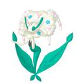 Florges Weißblütler