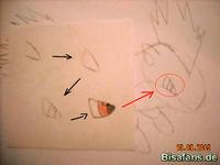 Zeichenkurs Igelavar - Schritt 8